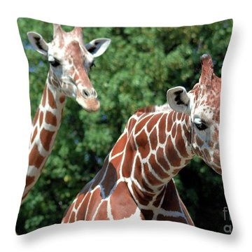 Two Giraffes Throw Pillow by Kathleen Struckle