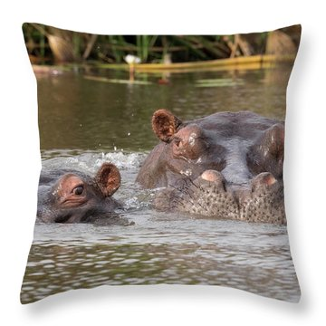 Two Hippopotamus Hippopotamus Amphibius Throw Pillow