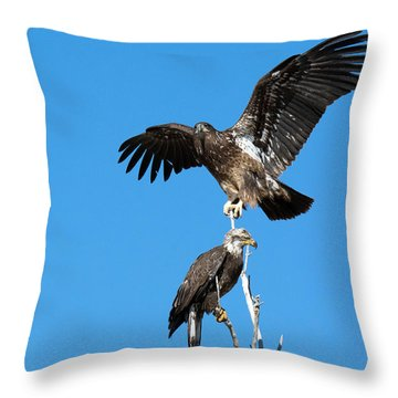 Two Immature Bald Eagles Throw Pillow