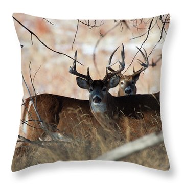 Throw Pillow featuring the photograph Two In The Bush by Jim Garrison
