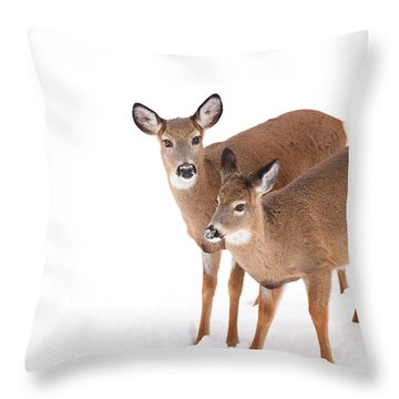 Two In The Snow Throw Pillow by Karol Livote