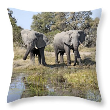 Throw Pillow featuring the photograph Two Male Elephants Okavango Delta by Liz Leyden