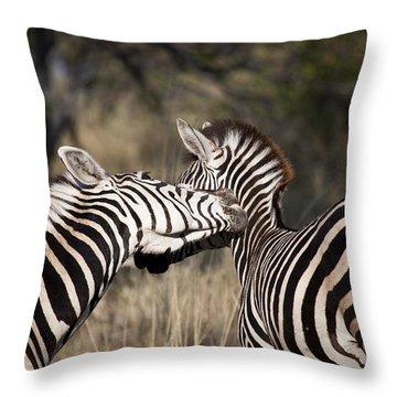 Throw Pillow featuring the photograph Two Plains Zebra Botswana by Liz Leyden