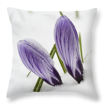 Two Purple Crocuses In Spring With Snow Throw Pillow