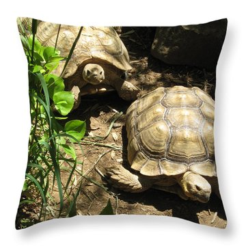 Two Tortoises Throw Pillow by CML Brown