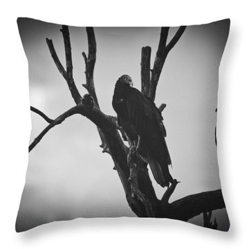Throw Pillow featuring the photograph Two Vultures by Bradley R Youngberg