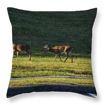 Two White Tailed Deer Fighting And A Third Is About To Engage Throw Pillow
