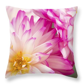 Two White And Pink Decorative Dahlias Throw Pillow by Daphne Sampson