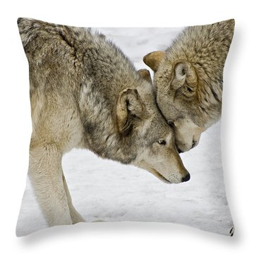 Two Wolves In  A Staredown Throw Pillow by Gary Slawsky