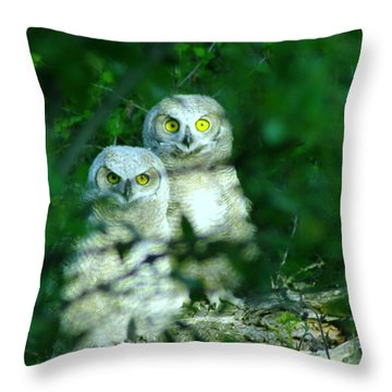 Two Young Owls Throw Pillow by Jeff Swan