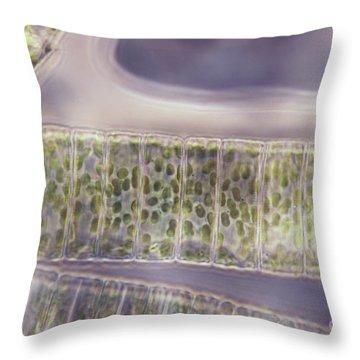 Ulothrix Sp. Algae, Lm Throw Pillow by David M. Phillips