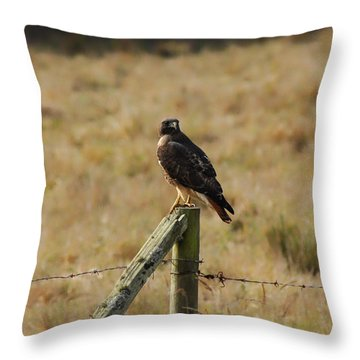 Under A Watchful Eye Throw Pillow by Donna Blackhall