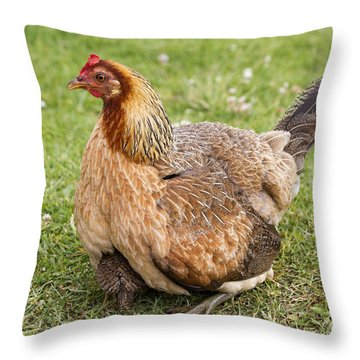 Under Mom's Wing Throw Pillow by Mike  Dawson