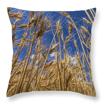Under The Wheat Throw Pillow by Rob Graham