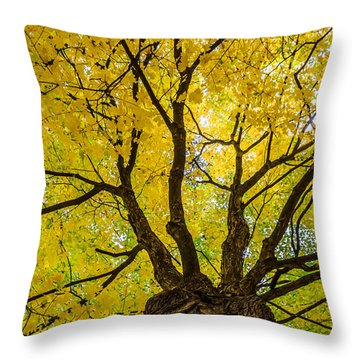 Under The Yellow Canopy Throw Pillow by Debra Martz