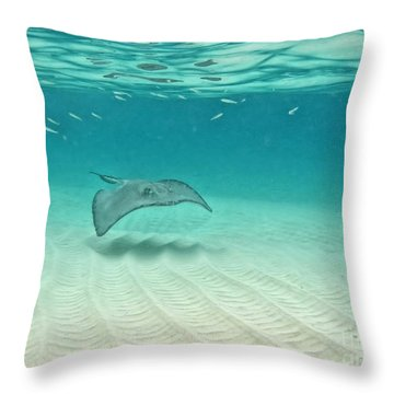 Underwater Flight Throw Pillow by Peggy Hughes