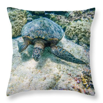 Swimming Turtle Throw Pillow by Denise Bird