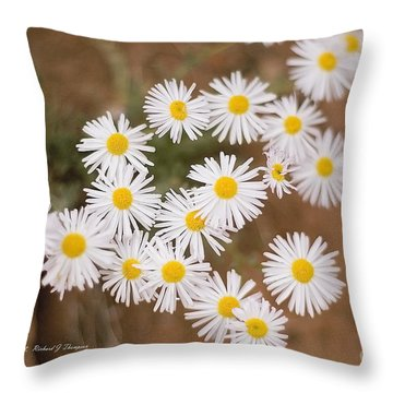 Unidentified Daisy Throw Pillow