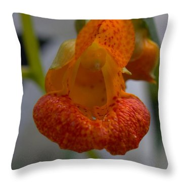 Unidetified Wildflower Throw Pillow