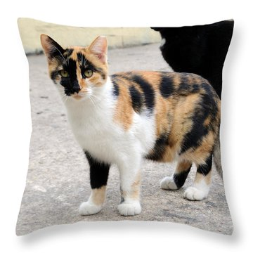 Golden Pirate Cat  Throw Pillow by Haleh Mahbod