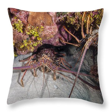 Up And Down Lobster Throw Pillow