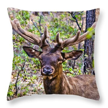 Throw Pillow featuring the photograph Up Close And Personal With An Elk by Bob and Nadine Johnston