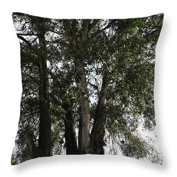 Up-view Of Oak Tree Throw Pillow