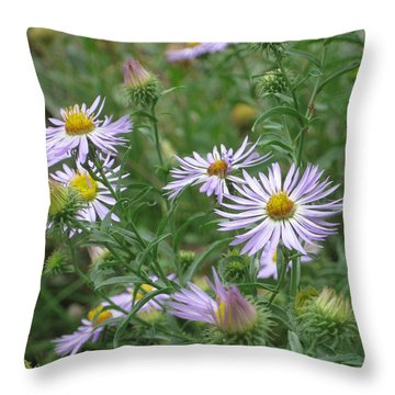 Uplifted Asters Throw Pillow