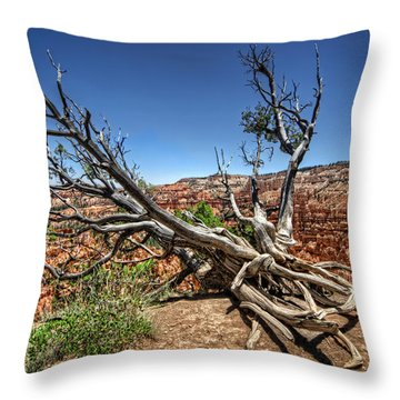 Throw Pillow featuring the photograph Uprooted - Bryce Canyon by Tammy Wetzel