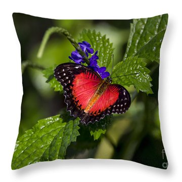 Valentine Butterfly Throw Pillow
