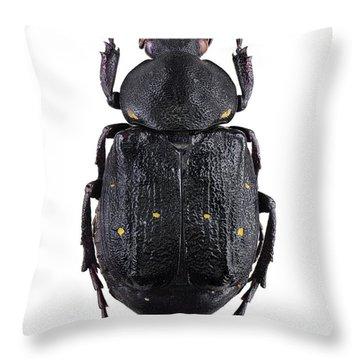Arthropods Throw Pillows