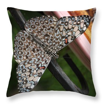 Throw Pillow featuring the photograph Variable Craker Butterfly #2 by Judy Whitton