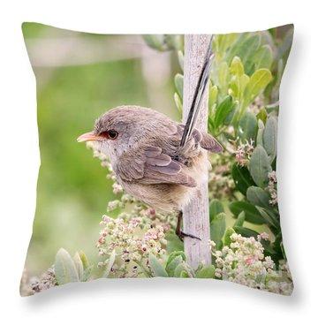 Variegated Fairywren  Throw Pillow