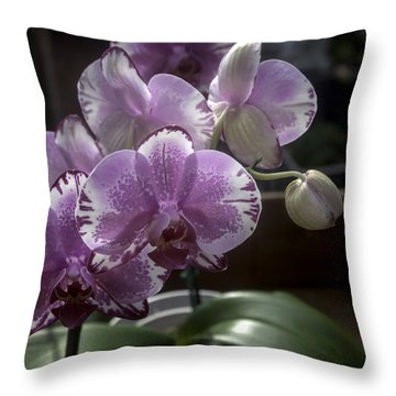 Variegated Fuscia And White Orchid Throw Pillow by Lynn Palmer