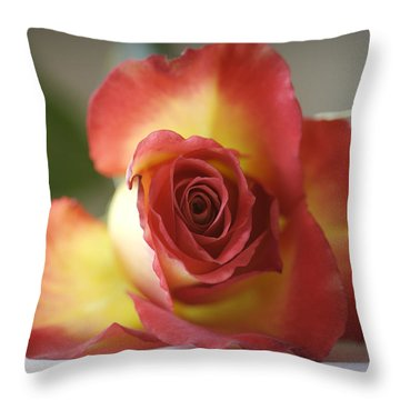 Variegated Rose Throw Pillow