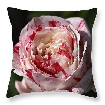 Throw Pillow featuring the photograph Variegated Rose by Joy Watson