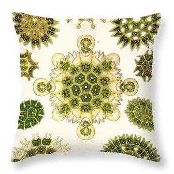 Varities Of Pediastrum From Kunstformen Der Natur Throw Pillow