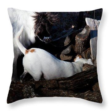 Varmints Beware Throw Pillow