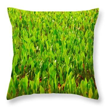 Vegetation, Boynton Beach, Florida, Usa Throw Pillow