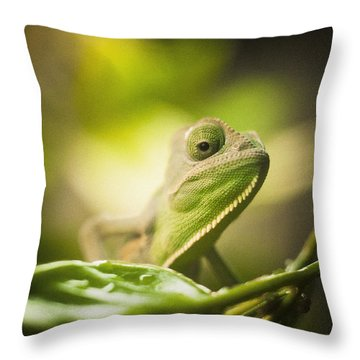 Veiled Chameleon Is Watching You Throw Pillow