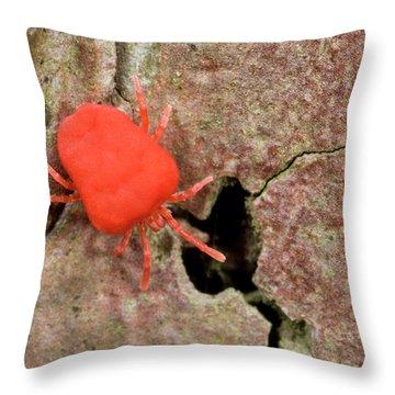 Norfolk Pine Throw Pillows