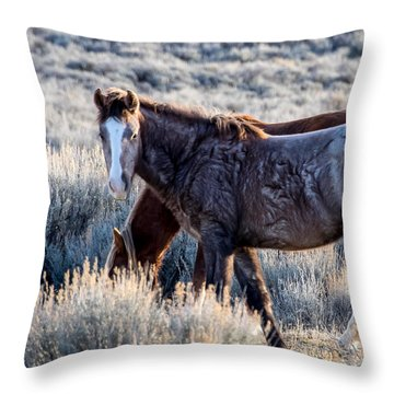 Velvet - Young Colt In Sand Wash Basin Throw Pillow