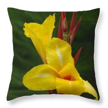 Velvety Yellow Iris  Throw Pillow