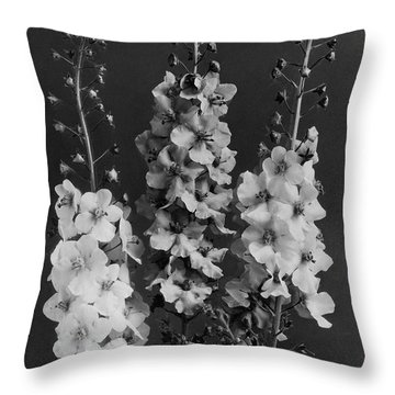 Verbascum Phoeniceum Flowers Throw Pillow