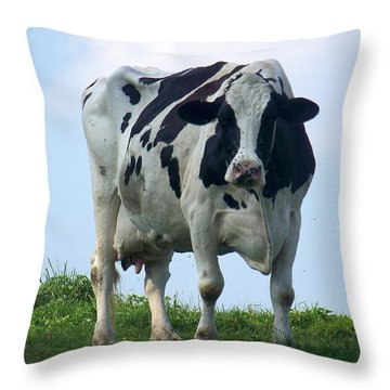 Vermont Dairy Cow Throw Pillow