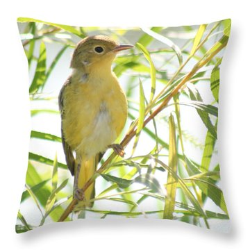 Very Yellow Warbler Throw Pillow