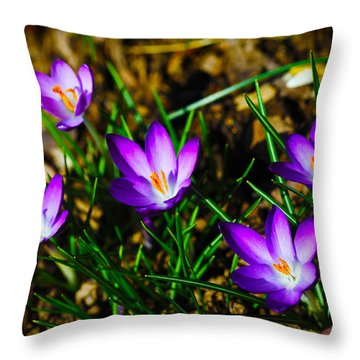 Vibrant Crocuses Throw Pillow by Karol Livote