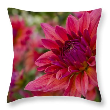 Vibrant Dahlias At Ferncliff Throw Pillow