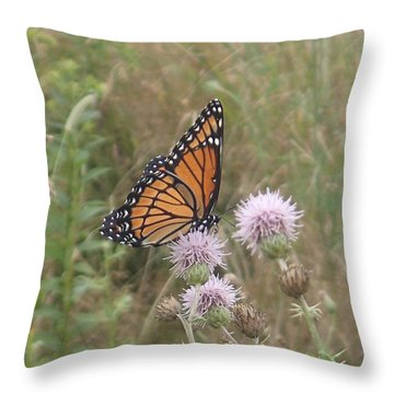 Throw Pillow featuring the photograph Viceroy On Thistle by Robert Nickologianis