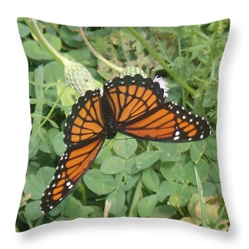 Throw Pillow featuring the photograph Viceroy by Robert Nickologianis